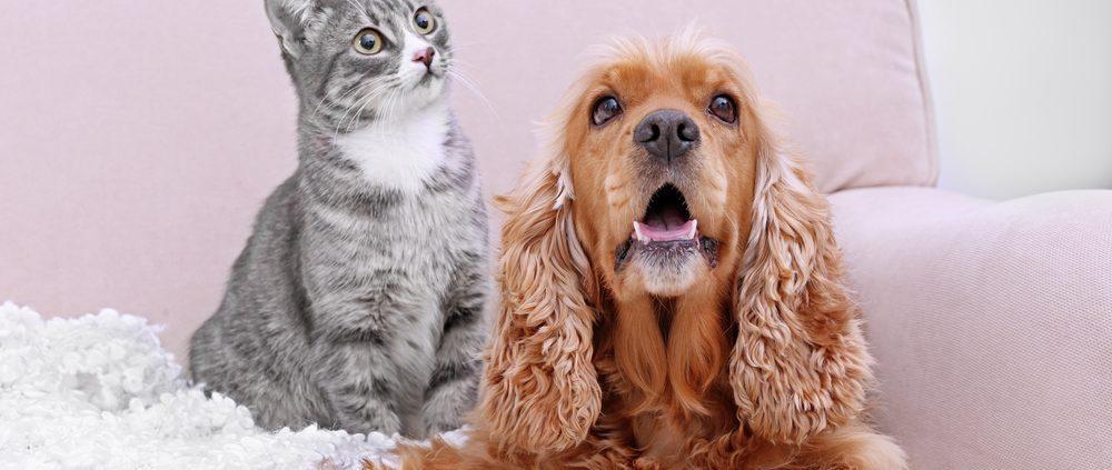 HVAC pet owners
